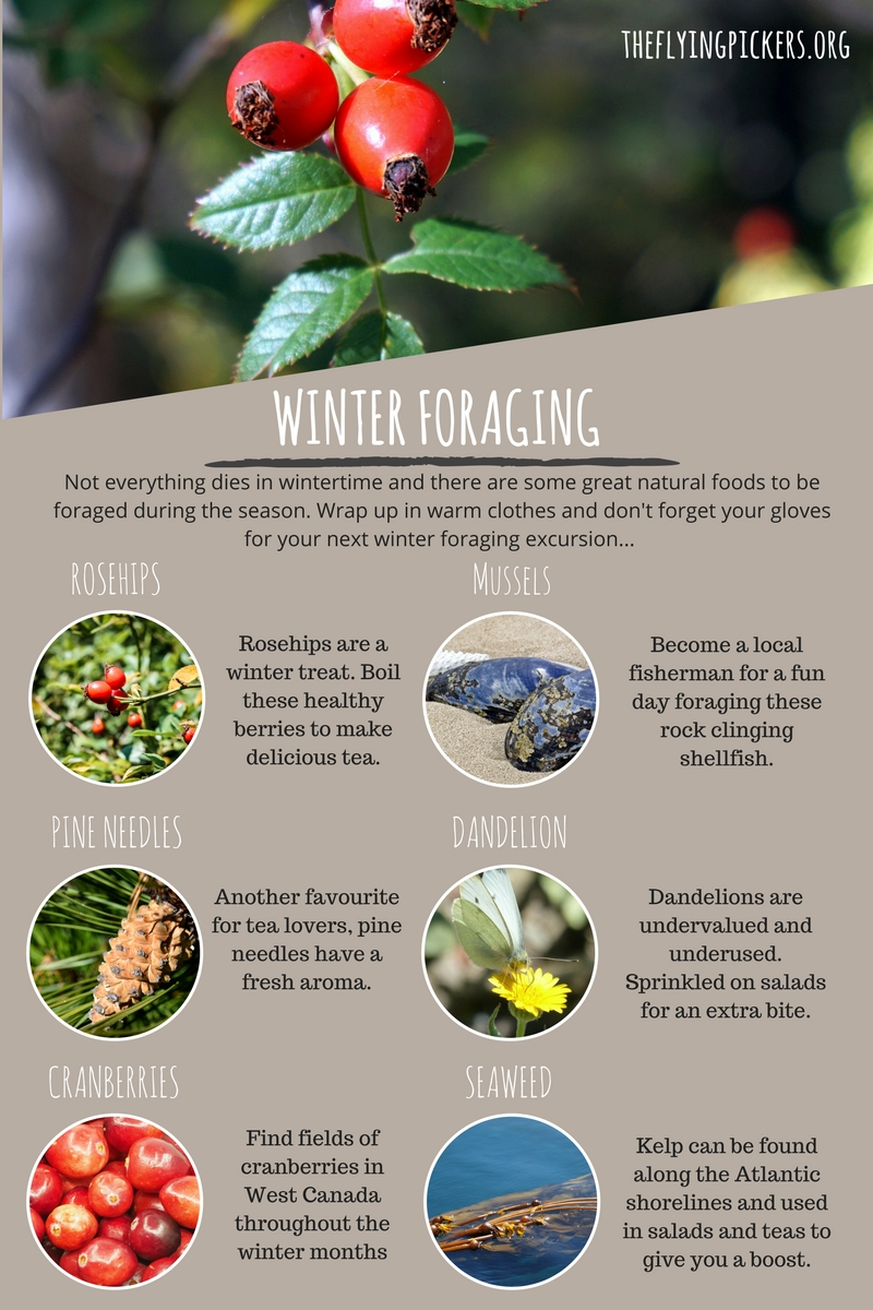 winter-foraging